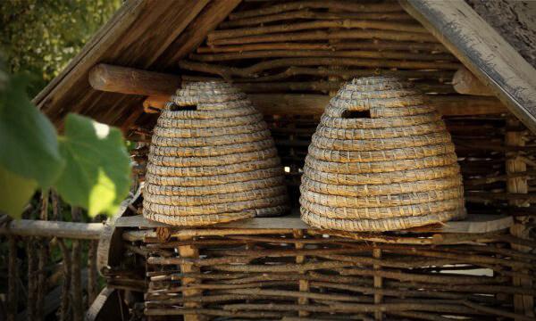 Bienen geben Zukunft