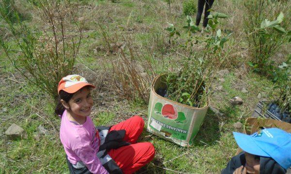 5.000 Bäume pflanzen in Bolivien für