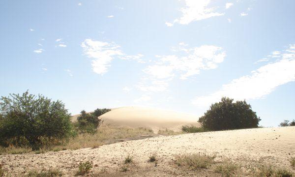 Dürre Brasilien